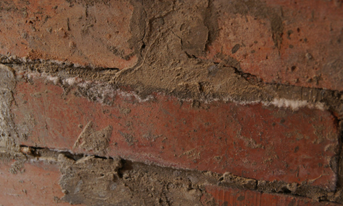 Проблема грибка на кирпичной стене